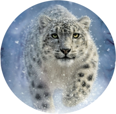 the-mountain-snow-ghost-leopard